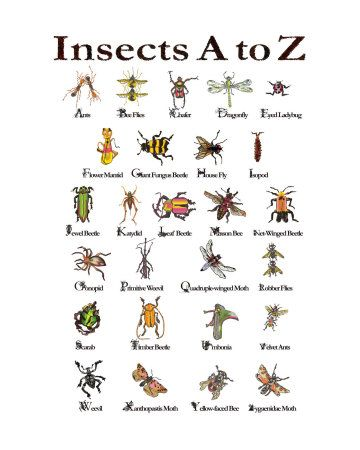 Pin By Evelyn Saenz On Insects Insects Insects Preschool Minibeasts Types of bugs for preschoolers
