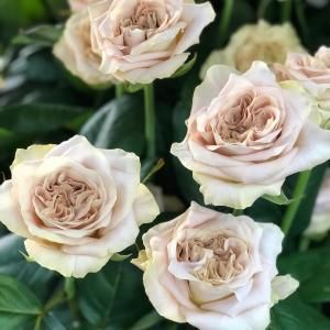 The Beauty Of Westminster Abbey Roses By Rworld Rose Westminster Abbey Westminster