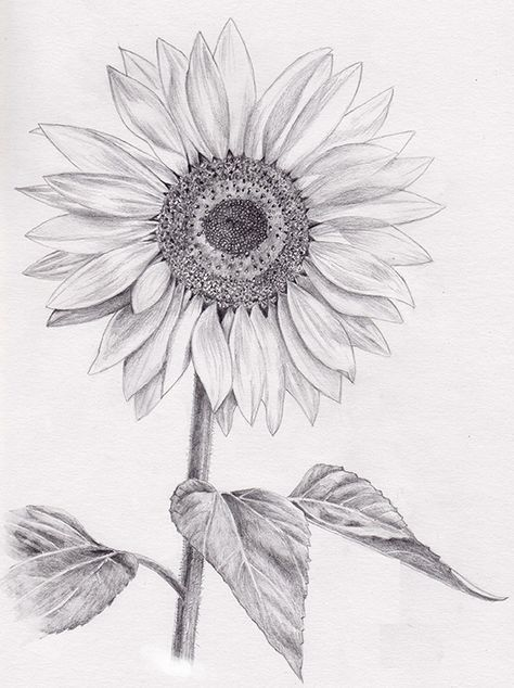 10 Mesmerising Drawing Flowers Mandala Ideas In 2020 Sunflower Drawing Sunflower Sketches Flower Drawing