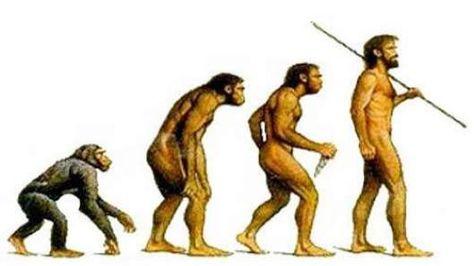 afbeeldingsresultaat voor evolutie van de mens | evolutie v.d. mens