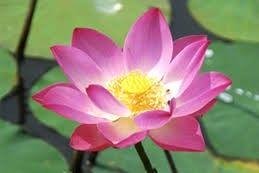 Pin By Haroon On عجائب المخلوقات Wonders Of Creation Flower Images Flowers Cue Cards