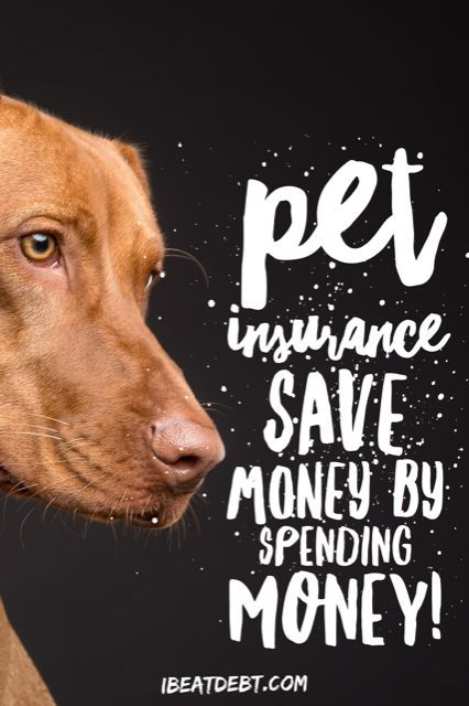 Pet Insurance Saving Money By Spending Money Saving Money