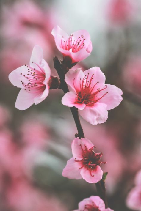 Lovely Little Details Weddings Events Pink Trees Pink Blossom Cherry Blossom Wedding
