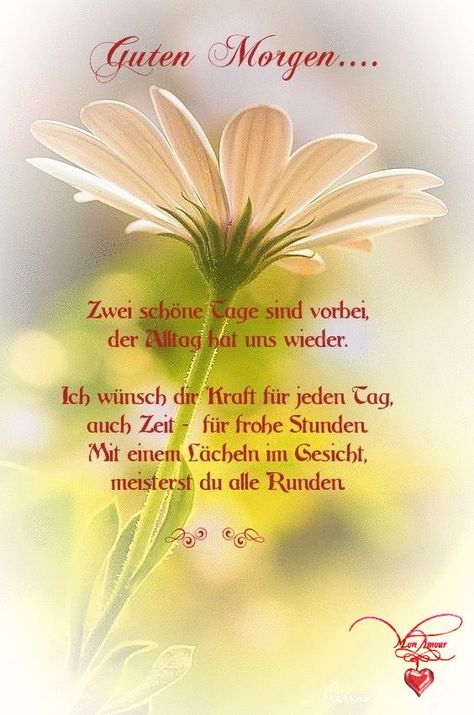 Zwei schöne Tage sind vorbei, der Alltag hat uns zurück. Ich wünsche dir Kraft ... - GOOD MORNING - #Alltag #der #dir #Good #hat #ich #Kraft #Morning #Schöne #sind #Tage #uns #vorbei #wünsche #zurück #zwei