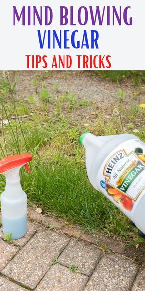 Pin By Jacqueline Dorsey On Vinegar In 2020 Homemade Cleaning Wipes Homemade Cleaning Solutions Household Cleaning Tips