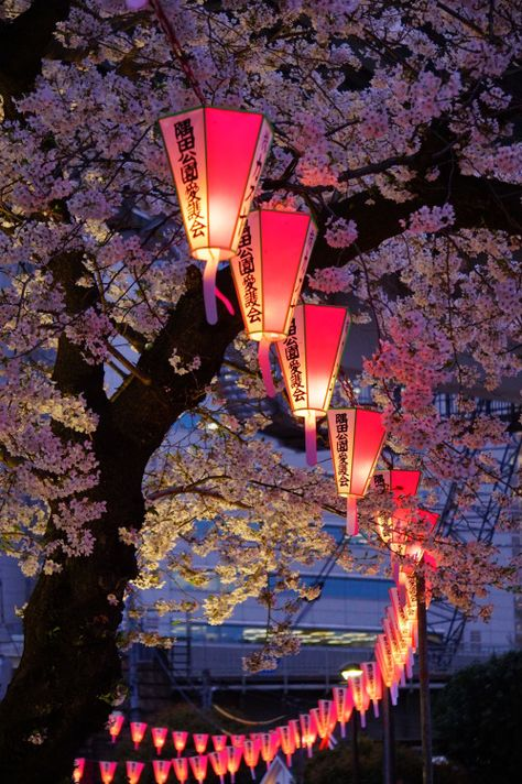 Lanterns in Japan Aesthetic Japan, Japanese Aesthetic, Travel Aesthetic, Japanese Paper Lanterns, Chinese Lanterns, Japanese Culture, Japanese Art, Japon Tokyo, Japon Illustration