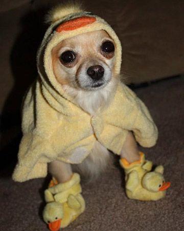 """I iz a chick and I go peep peep!""- http://www.marthastewart.com #easterphotos"