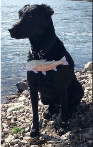 34+ Why does my dog have a fishy smell information
