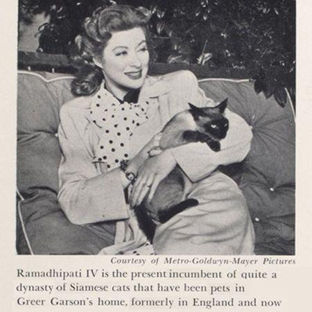 Famous Cat Lovers Actors Actresses Movie Celebrities Cat Lovers Cat People Siamese Cats