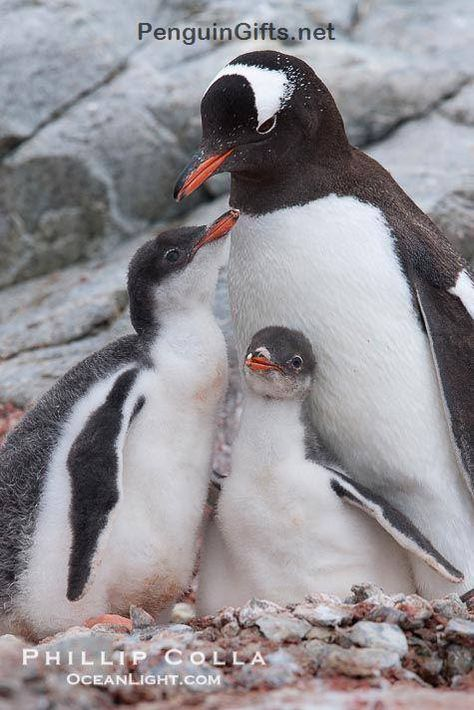 21 oz 3dRose wb/_123042/_1 I Love Penguins Sports Water Bottle White