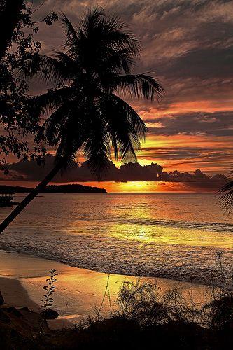 **St. Lucia, sunrise, sunset, beach, Palm tree, sun beams, beauty of Nature, reflection, photo