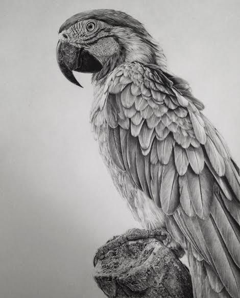Ave Dibujada A Mano Pencil Drawings Of Animals Realistic Drawings Pencil Portrait Drawing