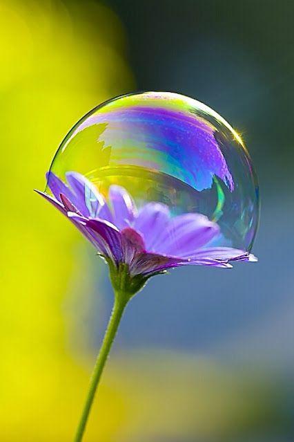 Bulles de savon sur fleur                                                       …