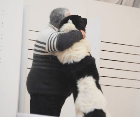 Au fost OMOLOGATE primele două RASE ROMÂNEȘI recunoscute INTERNAȚIONAL. E vorba de două rase de câini de PAZĂ I GALERIE FOTO