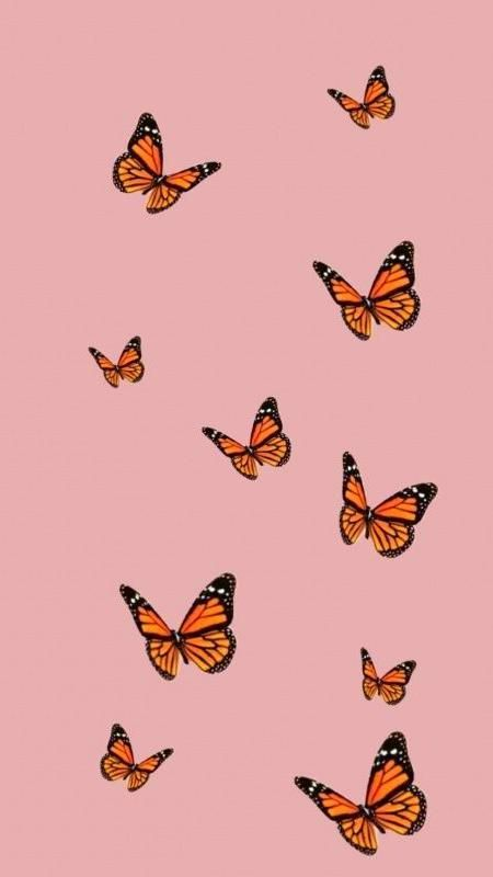 Wallpapers Iphone In 2020 Butterfly Wallpaper Iphone Butterfly Wallpaper Iphone Wallpaper Tumblr Aesthetic
