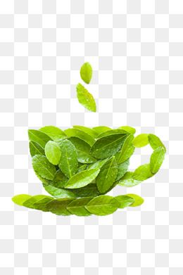 Tea Cup Tea Green Leaves Cup Png Transparent Clipart Image And Psd File For Free Download Green Leaf Tea Green Leaves Leaves