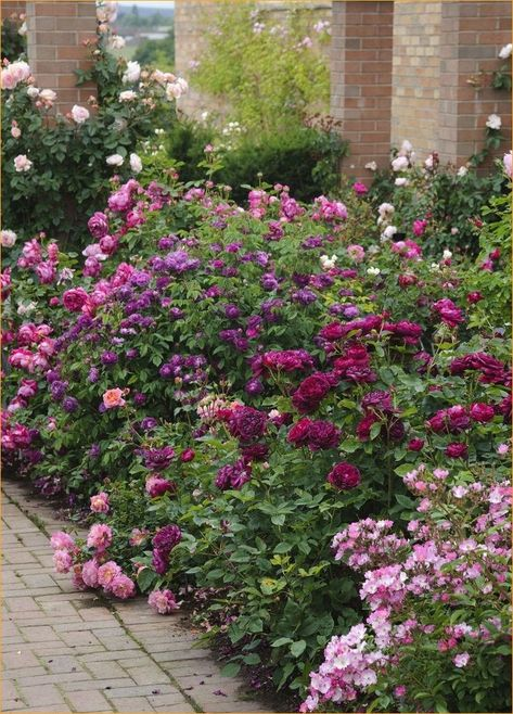 Awesome Pretty Cottage Garden Border Ideas 68 17 Best Images About Garden Border Ideas On Pinterest 1