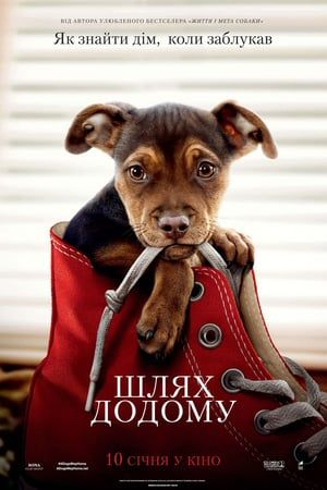 """Regarder A Dog S Way Home 2019 Streaming Vf Gratuit Ͻ†ï½‰ï½Œï½ Ͻƒï½ï½ï½ï½Œï½…ï½"""" En Francais Free Movies Online Full Movies Online Free A Dogs Purpose"""