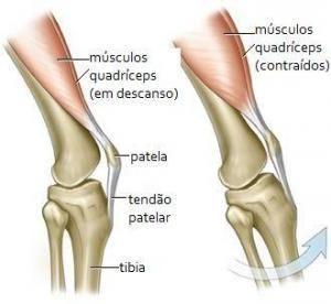 Anatomia Sistema Muscular Humano Sistema Muscular Humano