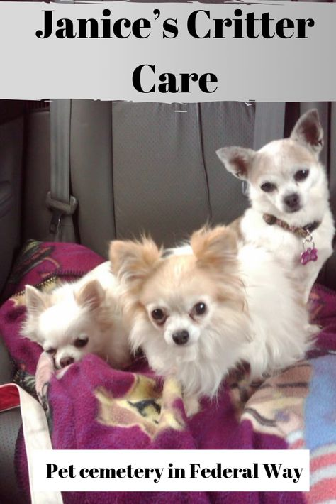 Worry Free Pet Care For Your Pets While You Re Away At Work Or