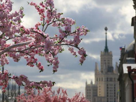 В Гидрометцентре сообщили о сроках наступления весны