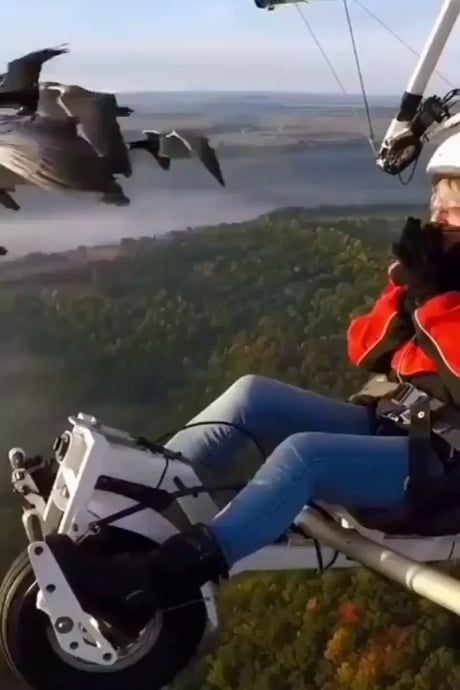 Amazingly Oddly Satisfying Migration with Ducks!