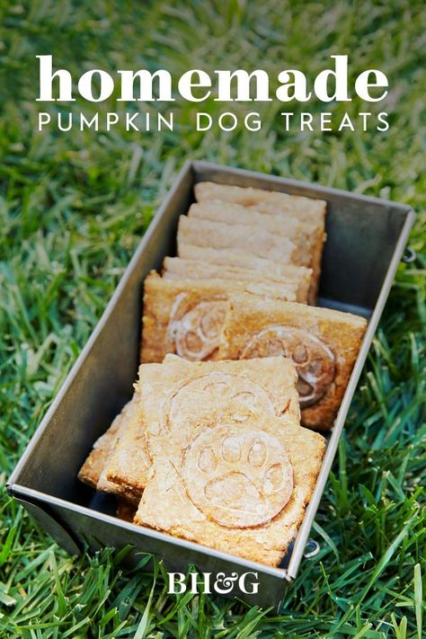 Thanks to these homemade dog treats, your pup can enjoy pumpkin season, too. These pumpkin dog treats will have your furry friend even more excited for fall! #dogtreats #homemadedogtreats #pumpkindogtreatrecipe #bhg