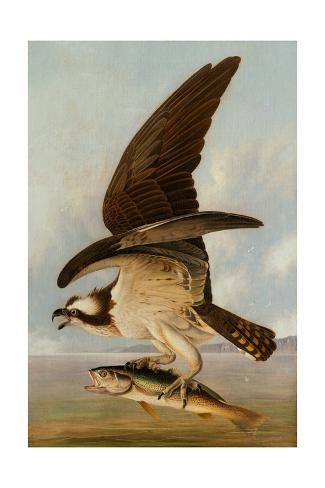 Golden Eagle Bird by John James Audubon Counted Cross Stitch Pattern
