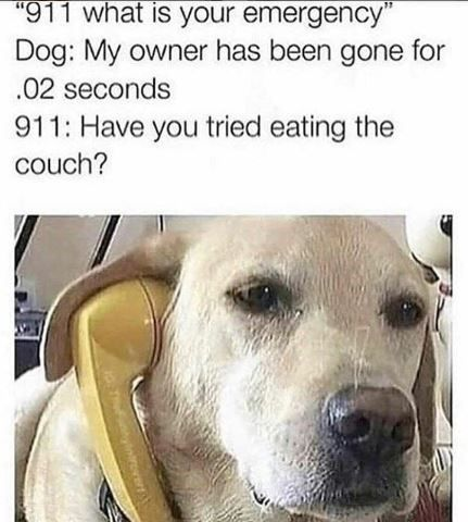 Doggo Memes For Those Who Need More Animals In Their Lives Funny Dog Memes Funny Animal Memes Dog Memes Clean