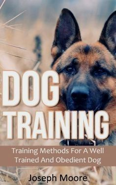 Dog training ideas, Make sure you stay consistent using the