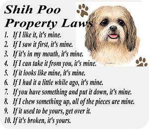 Parchment Print Shih Poo Dog Shih Tzu Poodle Mix Laws Shih Tzu