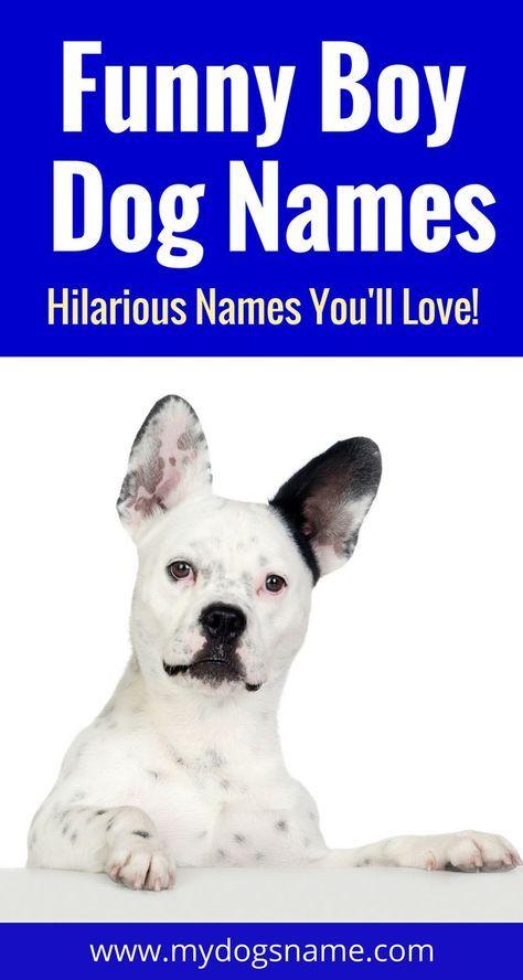 Names My Dog S Name Funny Dog Names Dog Names Unique Boy Puppy Names