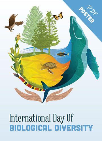 Biological Diversity Poster 3 Diversity Poster Biology Poster