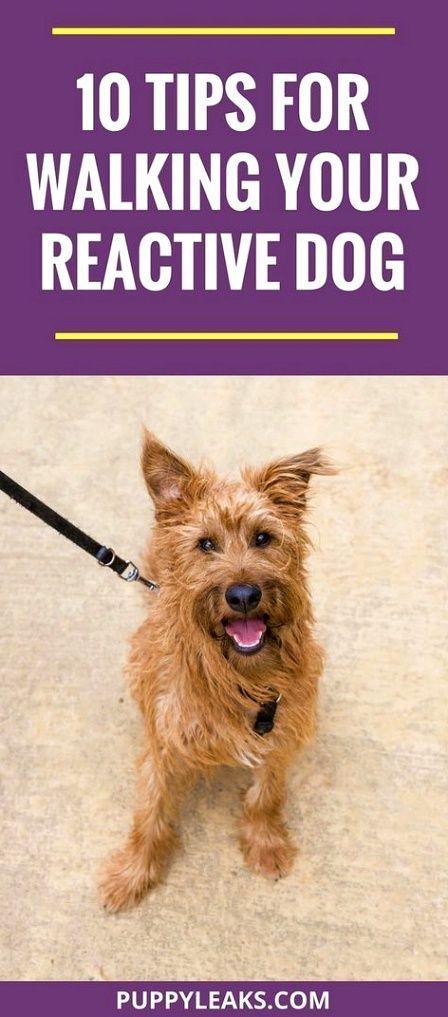 Best Obedience Training Dogtrainingparko Puppyanddogtrainingtips