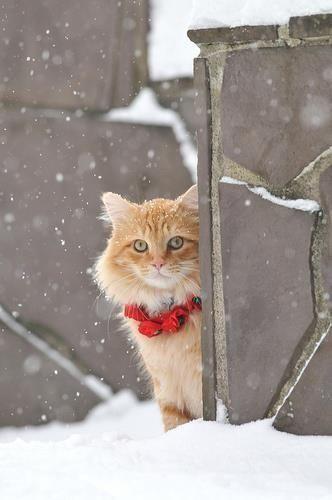Pin By Snow Katt On Cats Christmas Cats Cats Kittens