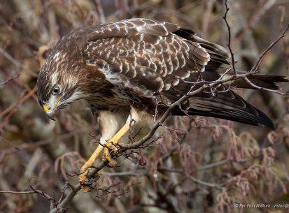Pin Pa Fugle Og Natur Fotos
