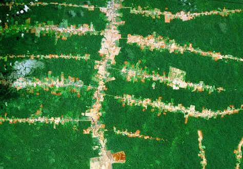 New Roads Being Built Through The Amazon Rainforest Causes