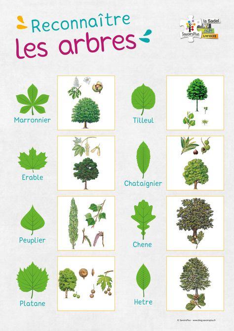 Téléchargement – Reconnaître les arbres – Le blog SavoirsPlus