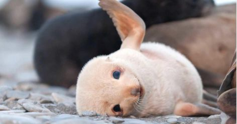 This Tumblr Page Is All About Cute Baby Animals And We Just