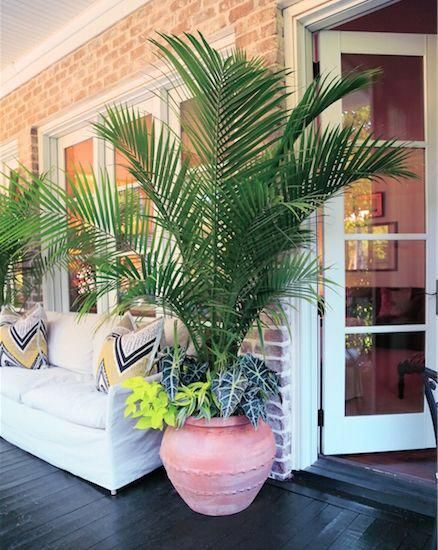 This Serene Porch In Columbia Is Given A Tropical Punch With Containers Of Parlor Palm Sweet Potato Vine Dragon Palm Trees Garden Potted Trees Tropical Patio