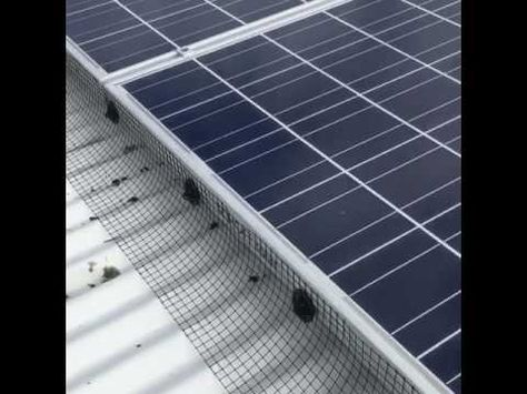 Solar Panel Cleaning And Pigeon Proofing Youtube Solar Panels Solar Paneling