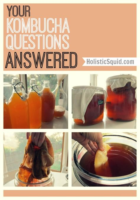 Has My Scoby Gone Bad? And other Kombucha questions answered... - Holistic Squid