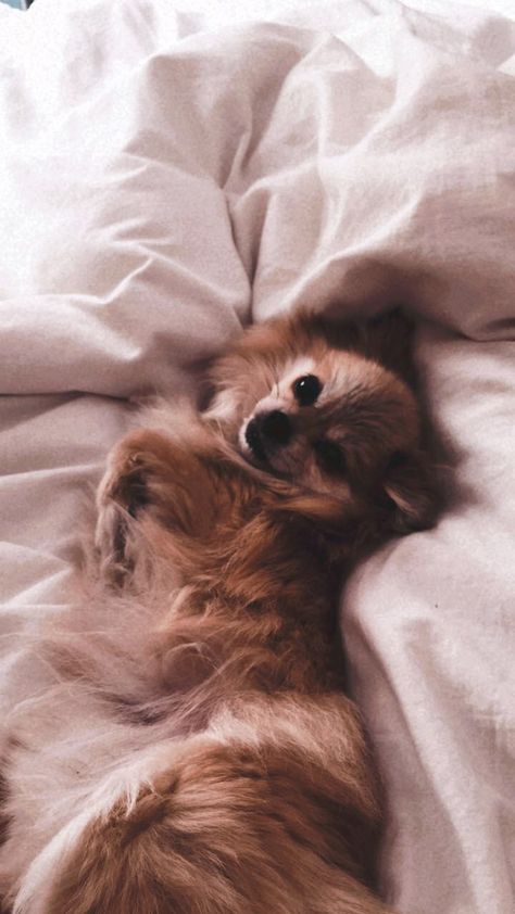#puppylove #aestheticdog #puppypower #dogs #dog #aesthetic #cuteness #adorable #furryfriends