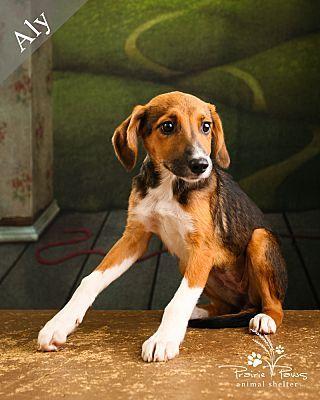 Ottawa Ks Beagle Meet Aly A Dog For Adoption Beagle Pet