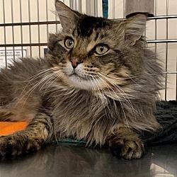 Pin On Cat Adoption Team