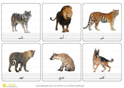 بطاقات مفردات حيوانات حيوانات لاحمة Animal Flashcards Preschool Worksheets Animals