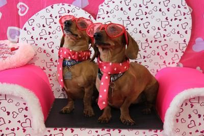 I Love My Wiener Party 2017 Edmonton Dachshund Social Club