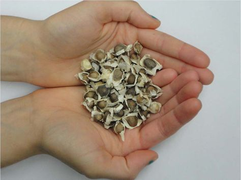 Need Clean Water? Get these Seeds! Shaken or stirred, it's all purified