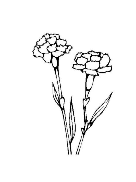 Carnation Flower Coloring Pages Carnation Drawing Carnation