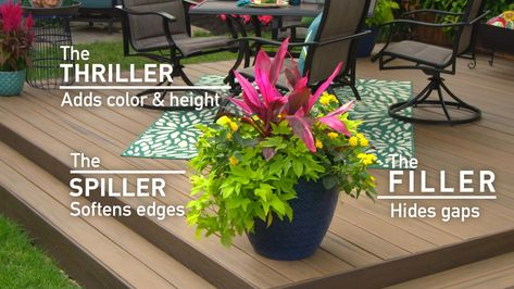 Learn how to plant simple, portable container gardens for your outdoor living space. Get tips on how to display plants in pots with this easy alternative to traditional garden beds.
